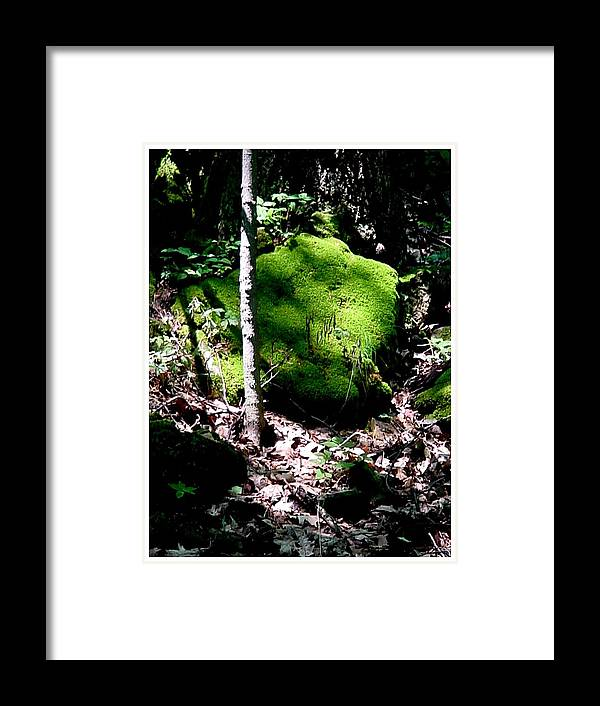 Woods Framed Print featuring the photograph Breakthrough by Frank Wickham
