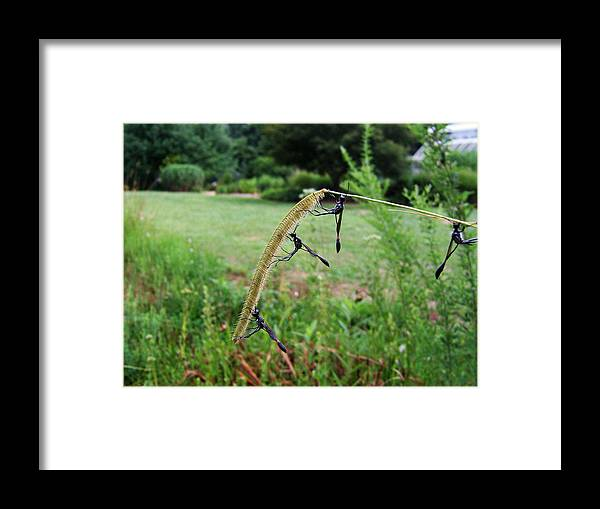 Wasp Framed Print featuring the photograph Breaktime 002 by George Bostian