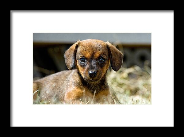 Cuddle Framed Print featuring the photograph Bridgit by Leslie Philipp