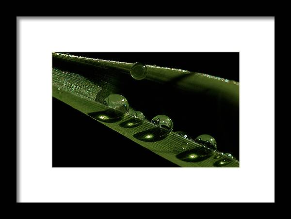 Drops Framed Print featuring the photograph Bright Drops by David Resnikoff