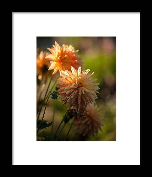 Flower Framed Print featuring the photograph Brilliant Sunlight by Mike Reid