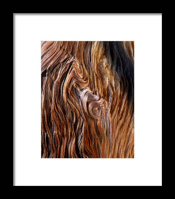 Grain Framed Print featuring the photograph Bristlecone Pine Grain by Mike Norton