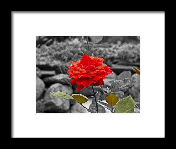 Rose Framed Print featuring the photograph Broken Camera by Dennis Dugan