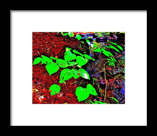 Landscape Framed Print featuring the photograph Brook Texture 15 by George Ramos