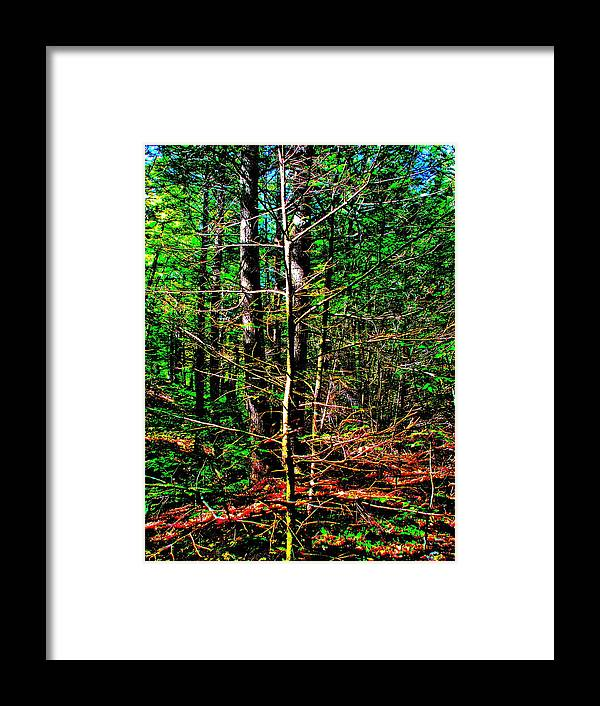 Landscape Framed Print featuring the photograph Brook Texture 17 by George Ramos