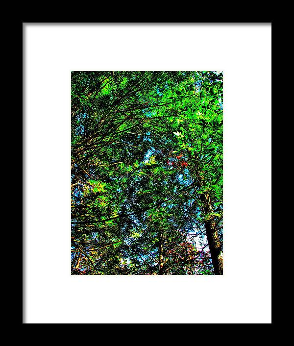 Landscape Framed Print featuring the photograph Brook Texture 6 by George Ramos