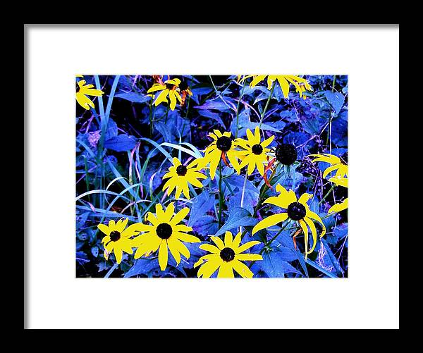 Flowers Framed Print featuring the photograph Brown Eyed Susan by Donald Black