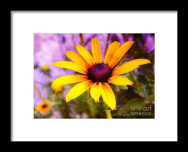 Sunflower Framed Print featuring the photograph Brown-eyed Susan by Judi Bagwell