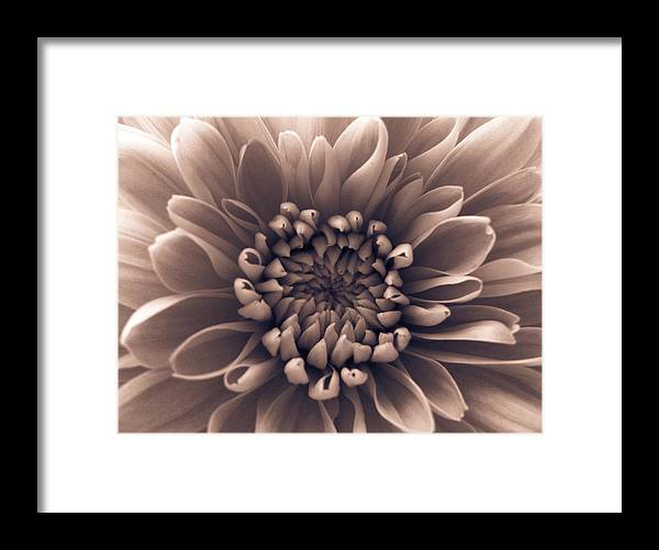 Pink Framed Print featuring the photograph Brown Flower by Dawn OConnor
