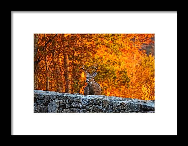 Metro Framed Print featuring the digital art Buck Digital Painting - 01 by Metro DC Photography