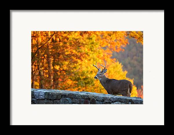 Metro Framed Print featuring the photograph Buck In The Fall 06 by Metro DC Photography