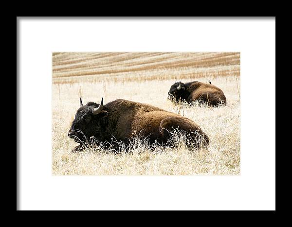 Utah Framed Print featuring the photograph Buff And Friend 2 by Marilyn Hunt
