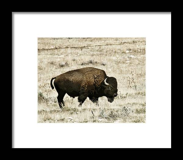 Utah Framed Print featuring the photograph Buff Profile by Marilyn Hunt