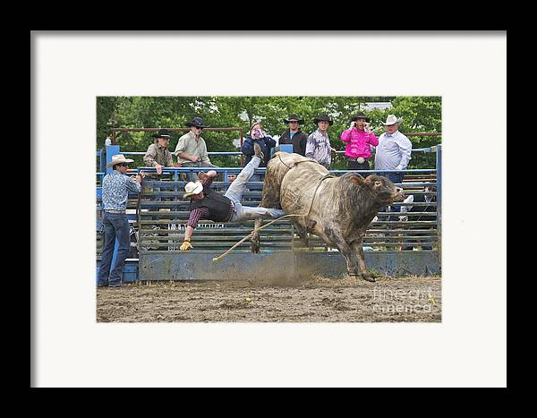 Photography Framed Print featuring the photograph Bull 1 - Rider 0 by Sean Griffin