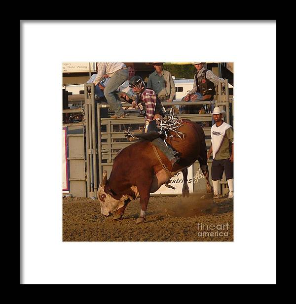 Red Bull Framed Print featuring the photograph Bull Riding by Bobbylee Farrier
