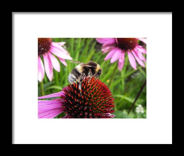Bee Framed Print featuring the photograph Bumble Bee by Eamon Gilbert