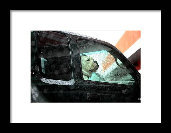 Dog Framed Print featuring the photograph Bummed by Marie Jamieson