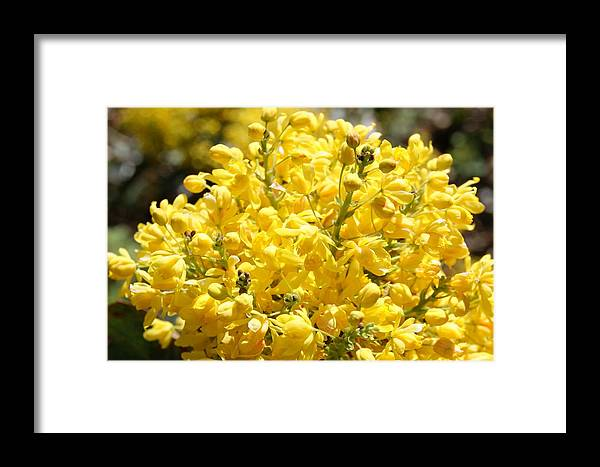 Flowers Framed Print featuring the photograph Bunches by Tina McKay-Brown