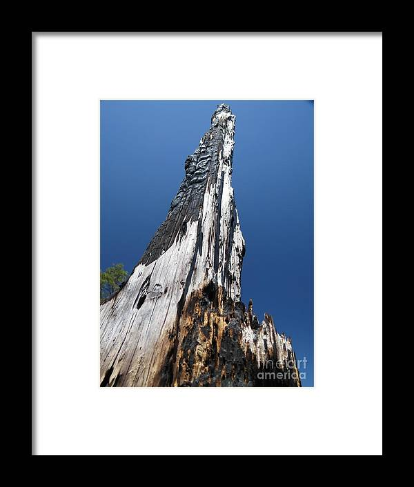 Tree Framed Print featuring the photograph Burnt Tree V by Rrrose Pix
