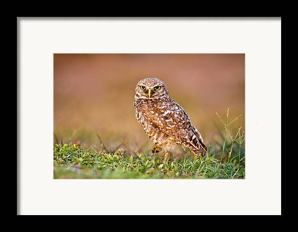 Horizontal Framed Print featuring the photograph Burrowing Owl by TNWA Photography