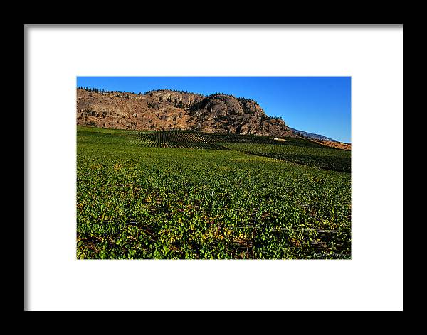 Wesley Framed Print featuring the photograph Burrowing Owl Vineyard by Wesley Allen Shaw
