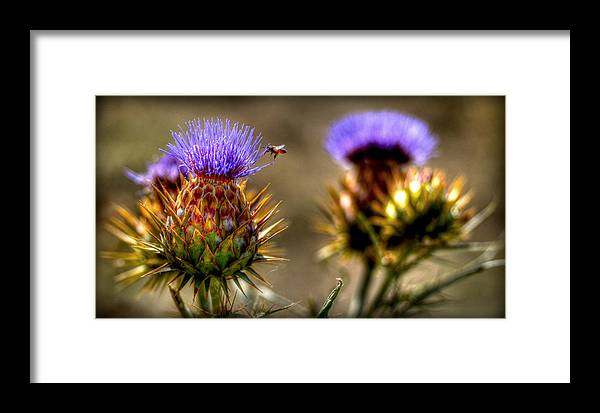 Plant Life Framed Print featuring the photograph Busy Bee by Craig Incardone