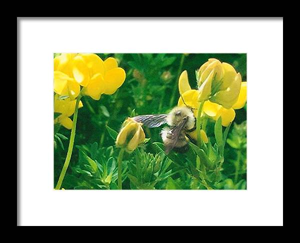 Flowers Framed Print featuring the photograph Busy Bee by Hollie Cyr