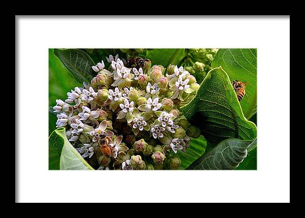Flower Framed Print featuring the photograph Busy Bees by Alan Seelye-James