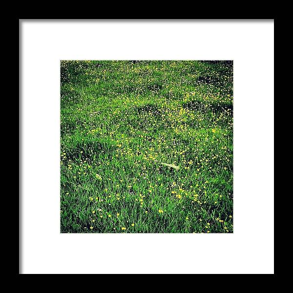 Buttercups Framed Print featuring the photograph Buttercups by Nic Squirrell