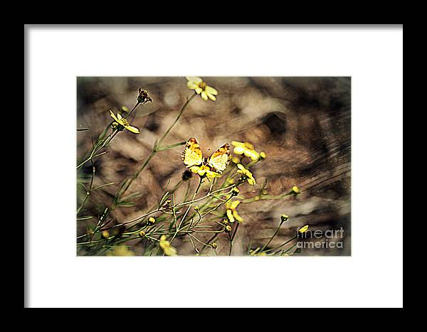 Butterfly Framed Print featuring the painting Butterflies by Nicky Dou