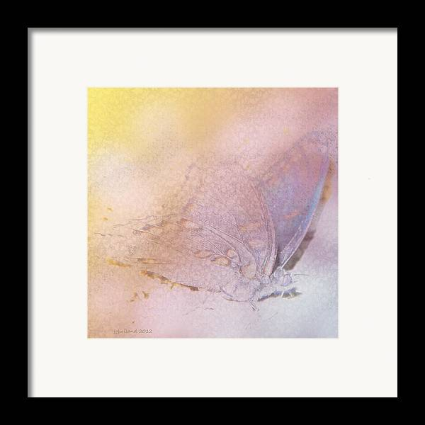 Digital Butterfly Framed Print featuring the photograph Butterfly Abstract by Joseph G Holland