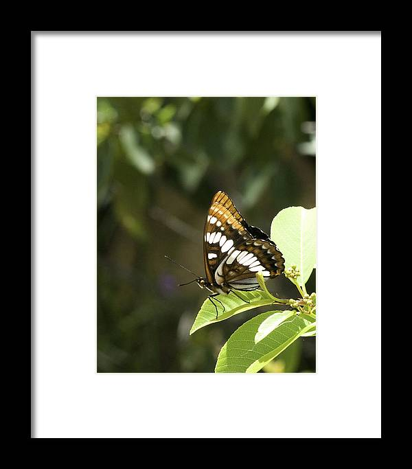 Butterfly Framed Print featuring the photograph Butterfly At Rest by Betty Depee