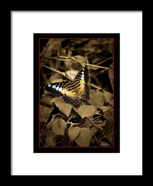 Butterfly Framed Print featuring the photograph Butterfly Brown by Linda Olsen