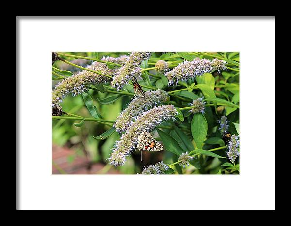 Bugs Framed Print featuring the photograph Butterfly Bush by Frank Nicolato