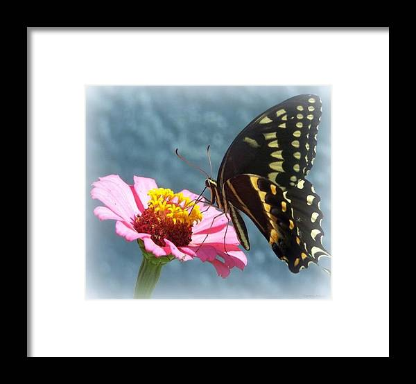 Butterfly Framed Print featuring the photograph Butterfly by Cynthia Amaral