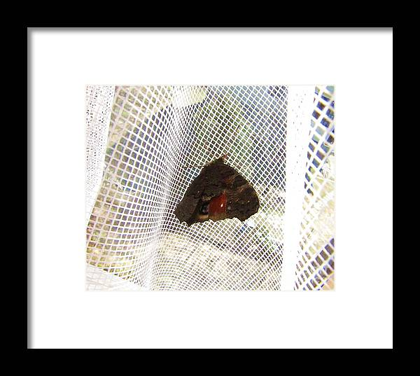 The Nature Framed Print featuring the photograph Butterfly In Network by Yury Bashkin