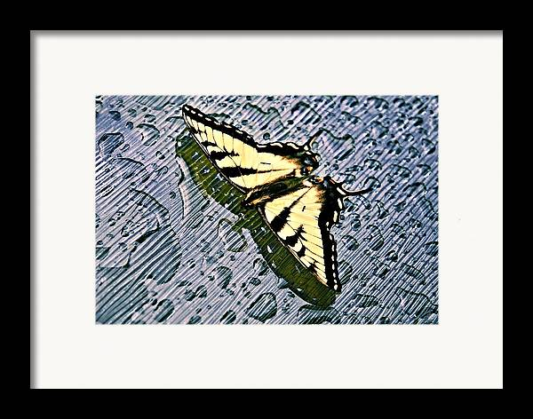 Nature Framed Print featuring the photograph Butterfly In Rain by Susan Leggett