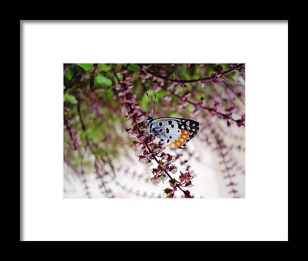 Butterfly Insects Nature Plants Flora Flowers Framed Print featuring the photograph Butterfly by Sumit Mehndiratta