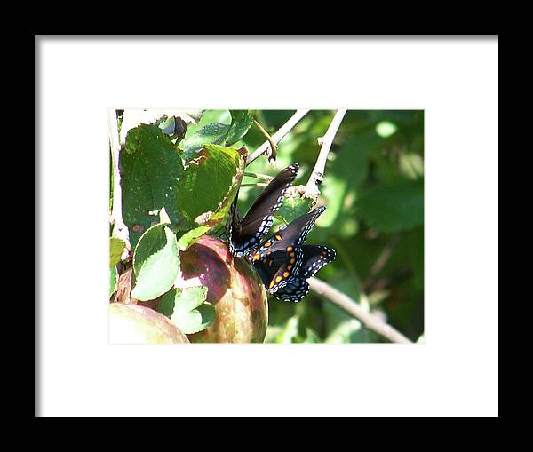 Butterfly Framed Print featuring the photograph Butterfly4 by Martha Abell
