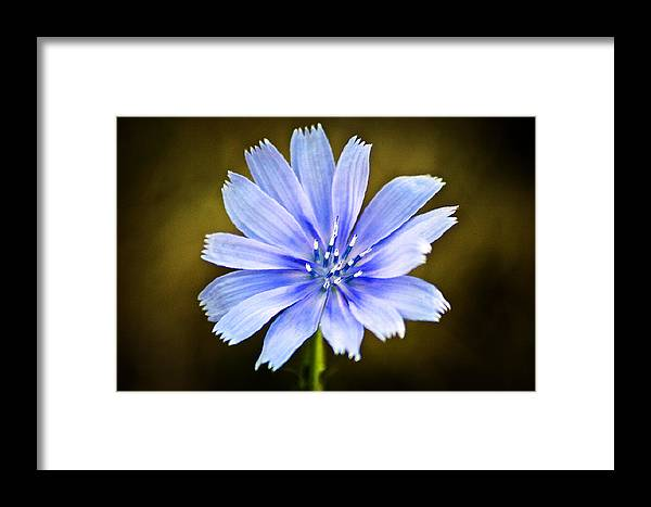 Macro Framed Print featuring the photograph By Any Other Name by Steve Buckenberger