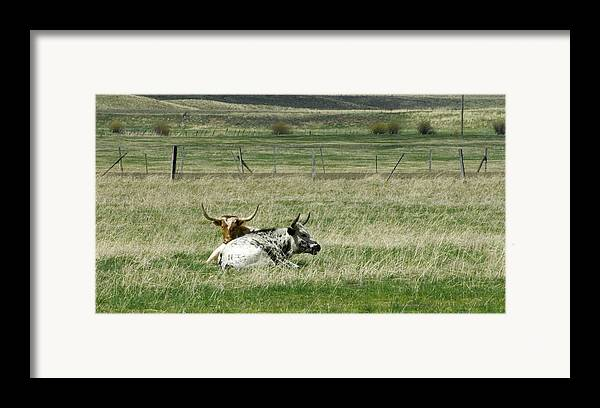 Steer Framed Print featuring the photograph By The Horns by Sara Stevenson