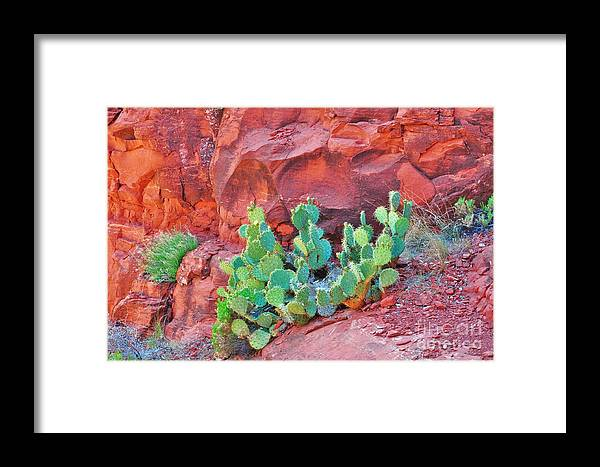 Sedona Framed Print featuring the photograph Cactus Growing In The Red Rocks by George Sylvia