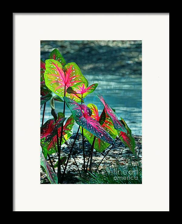 Calladiums Framed Print featuring the photograph Calladiums by Judi Bagwell