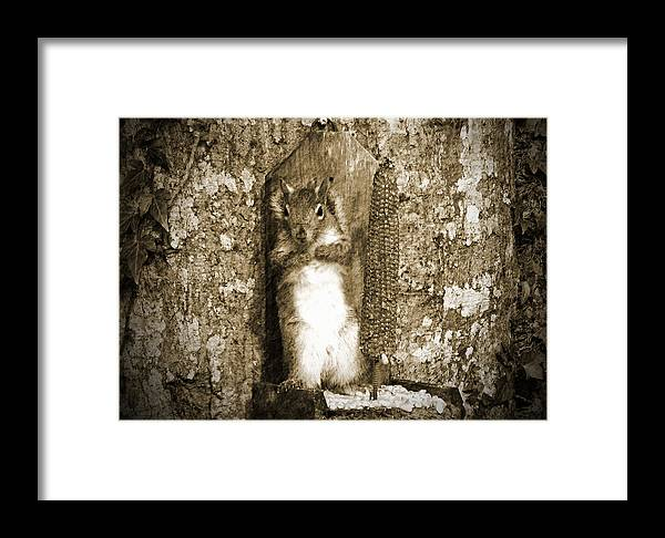 Squirrel Framed Print featuring the photograph Can You See Me Now by Marjorie Smith