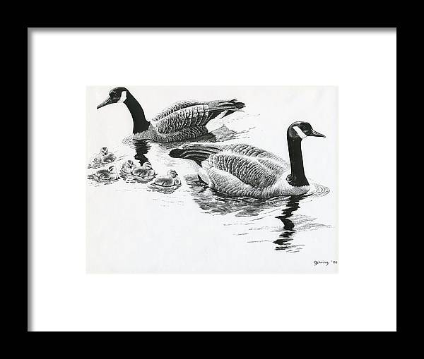 Ducks Framed Print featuring the drawing Canada Geese by Bill Gehring