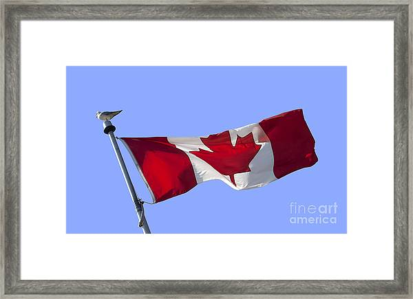 Canadian Flag Framed Print By Blink Images