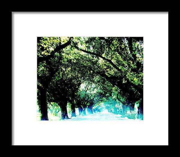 Live Oak Framed Print featuring the photograph Canopy by Lizi Beard-Ward
