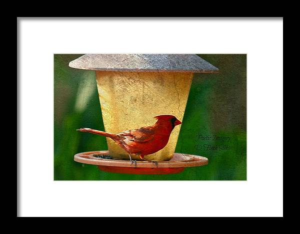 Bird Framed Print featuring the photograph Cardinal by Debbie Sikes