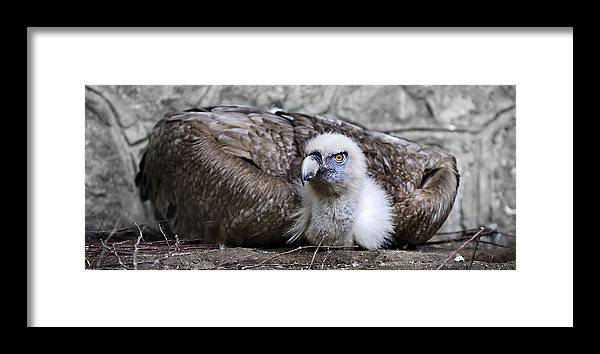 Bird Framed Print featuring the photograph Caring Mom by Zoran Buletic