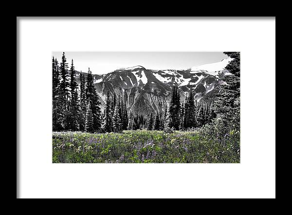 Mount Rainier Framed Print featuring the photograph Cascade Range Meadow by David Patterson